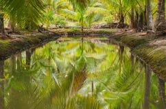 Отражение кокосовых пальм в канале на саде Абстрактный bac Стоковое Изображение