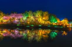 Отражение красивого парка дерева на ningth Стоковое Фото