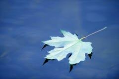 Отражение кленового листа Дзэн в пруде Стоковое фото RF