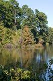 отражение листва Стоковые Изображения