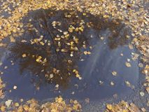 Отражение листьев осени в лужице Стоковое Изображение