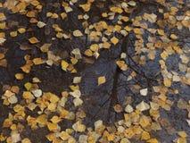 Отражение листьев осени в лужице Стоковая Фотография RF