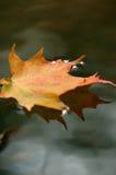 отражение листьев Стоковое фото RF