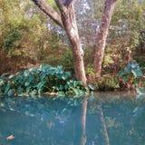 Отражение между деревьями и водой стоковое изображение