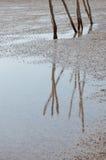 Отражение на мелководье Стоковая Фотография RF
