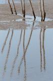 Отражение на мелководье Стоковое фото RF