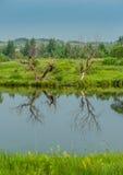 Отражение на озере Стоковые Фотографии RF
