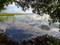 Отражение озера за деревьями Стоковые Фотографии RF
