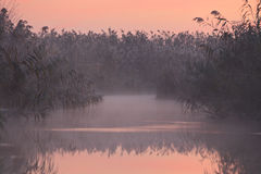отражение озера камышовое Стоковая Фотография RF