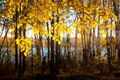 Отражение озера леса осени Озеро в лесе осени красивом Стоковое Фото