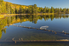 Отражение озера осен стоковое фото rf