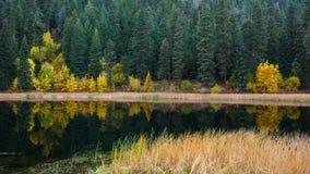 Отражение озера пущ Стоковое Изображение RF