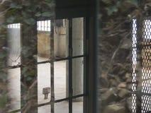 Отражение лозы в стекле Стоковые Изображения RF