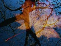отражение осени стоковая фотография rf