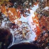 Отражение осени Стоковые Изображения RF