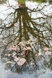 Отражение от поверхности пруда Стоковое Изображение RF