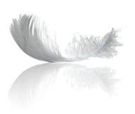 отражение пера светлое Стоковая Фотография