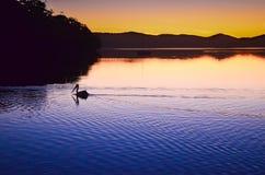 Отражение пеликана захода солнца Стоковая Фотография RF