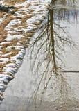 Отражение полного дерева струясь стоковые фотографии rf