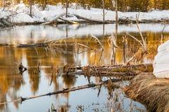 Отражение 1 потока зимы Стоковое фото RF
