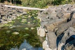 Отражение 2 потока парка стоковые фотографии rf