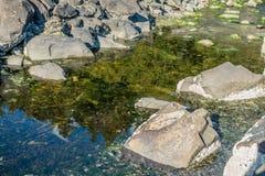 Отражение потока парка стоковая фотография rf