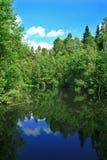 отражение пруда пущи Стоковые Изображения