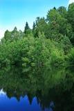 отражение пруда пущи Стоковое фото RF