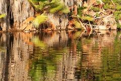 отражение пруда Стоковая Фотография