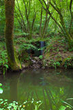 Отражение пруда Стоковое Изображение