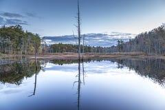 Отражение пруда Стоковые Фото
