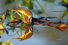 отражение птицы Стоковое фото RF