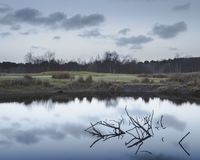Отражение раннего утра в небольшом озере со сломленным ветви стоковое изображение rf