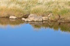 Отражение речного берега Стоковые Изображения RF