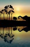 отражение слона Стоковые Изображения
