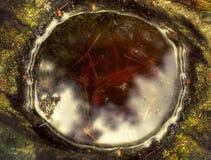 Отражение солнечного света в лужице воды Стоковые Изображения RF