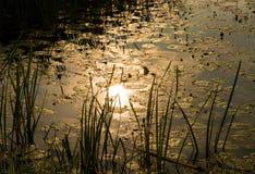 Отражение Солнця в пруде воды Стоковое Изображение