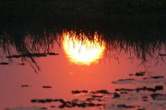 Отражение Солнця стоковое изображение rf