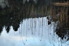 Отражение соломы Стоковая Фотография RF