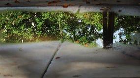 Отражение лужицы Стоковые Фото