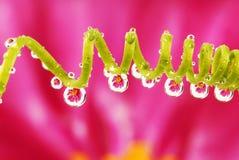 отражение цветка падений Стоковое фото RF