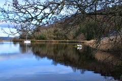 Отражение яхты и лебедей Стоковые Изображения