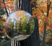 отражение 2 осеней стоковые изображения