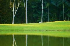 отражение Стоковые Изображения