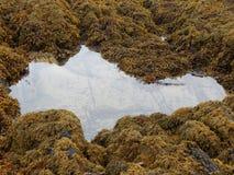 Отражение Rockpool Стоковые Фотографии RF