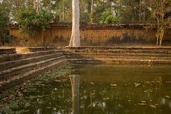 Отражение ` s дерева в бассейне воды древней стеной в Angkor Thom Стоковая Фотография RF