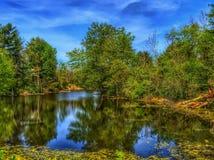 Отражения весны на пруде Стоковое фото RF