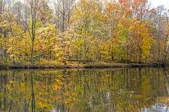 Отражения воды показывают вдоль реки в Smokies Стоковые Изображения RF