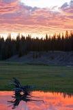 Отражения восхода солнца озера Йеллоустон с пнем Стоковые Изображения