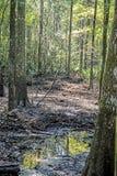 Отражения воды лета в водах болота Стоковая Фотография RF